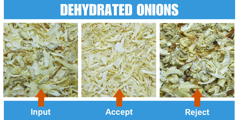 Sorted Sample Dehydrated Onion