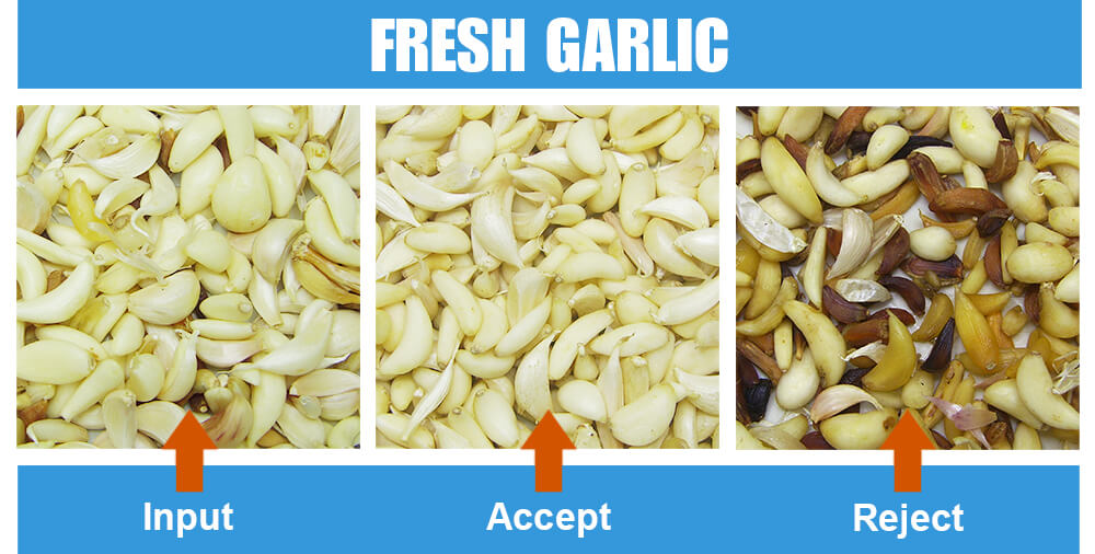 Sorted Sample Fresh Garlic