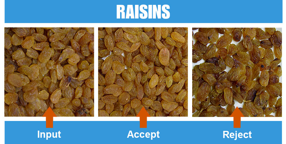 Sorted Sample Raisins