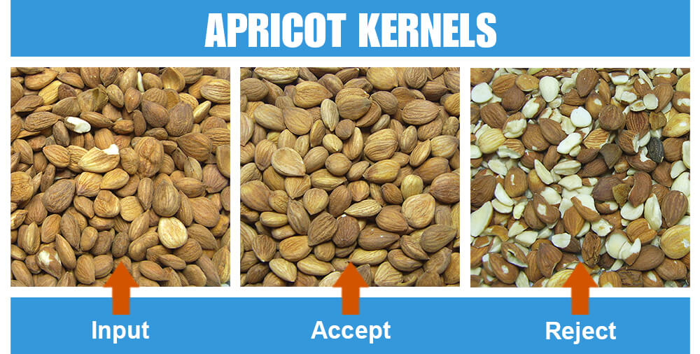 Sorted Sample Apricot Kernels One