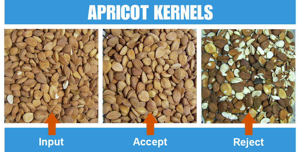 Sorted Sample Apricot Kernels