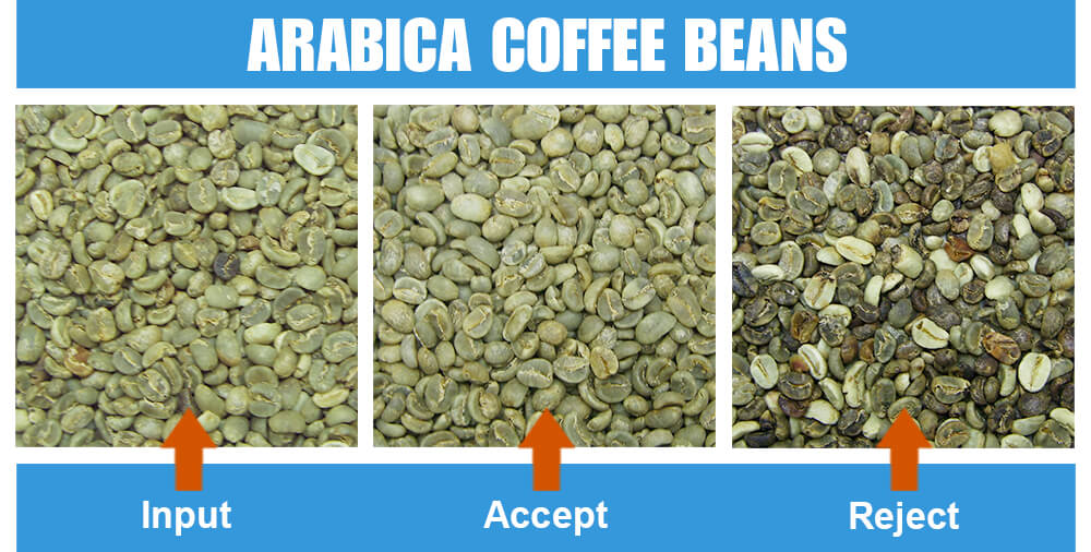 Sorted Sample Arabica Coffee Beans