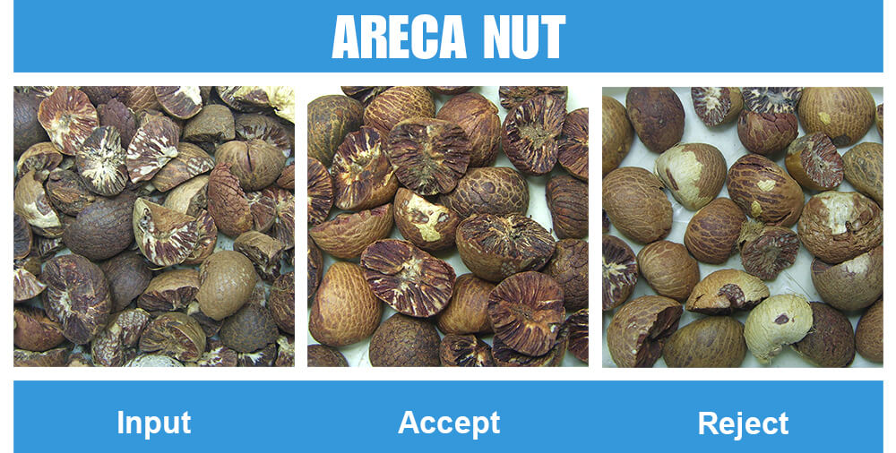 Sorted Sample Areca Nut