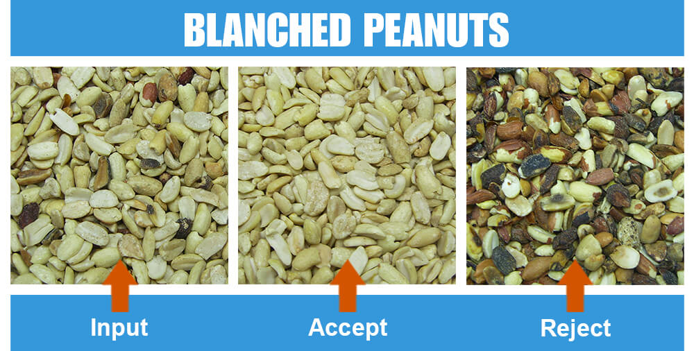 Sorted Sample Blanched Peanuts