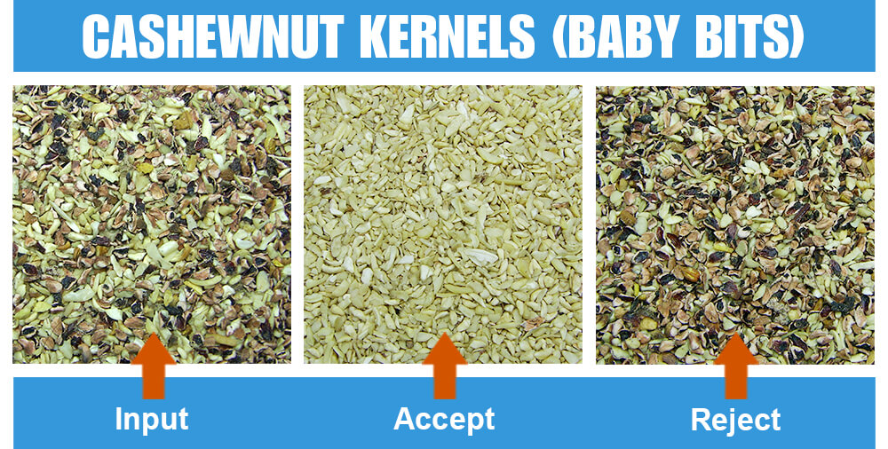 Sorted Sample Cashewnuts Kernels Baby Bits Three