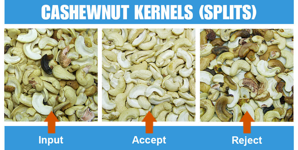 Sorted Sample Cashewnut Kernels Splits