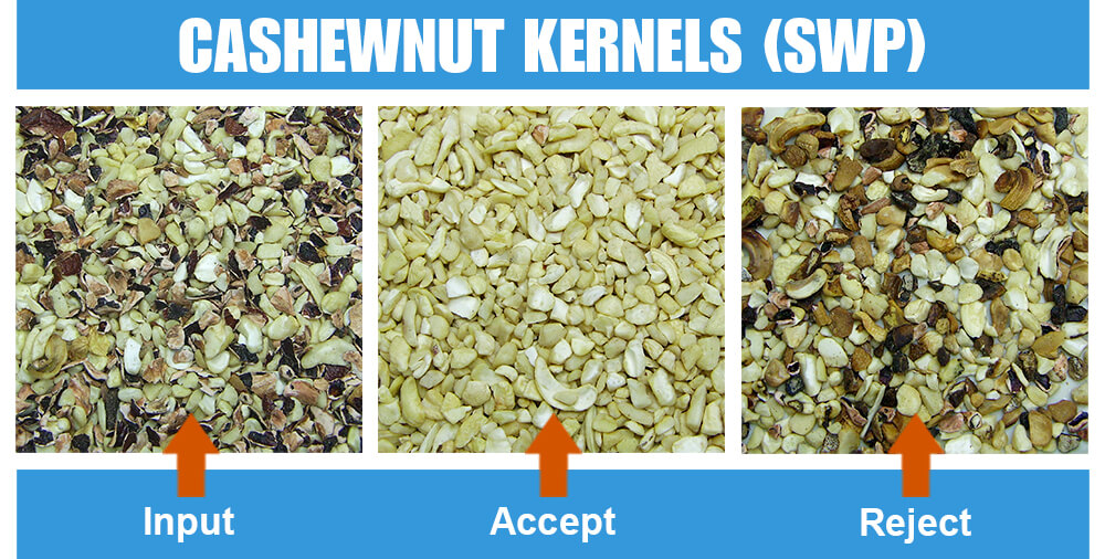 Sorted Sample Cashewnut Kernels Swp