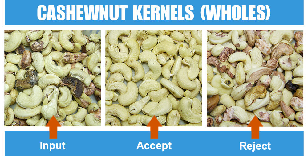 Sorted Sample Cashewnut Kernels Wholes