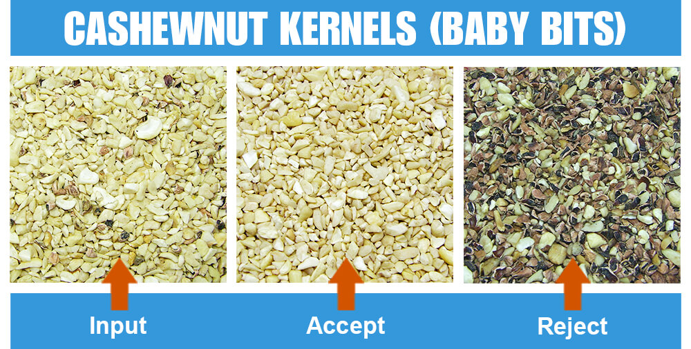 Sorted Sample Cashewnuts Kernels Baby Bits Two