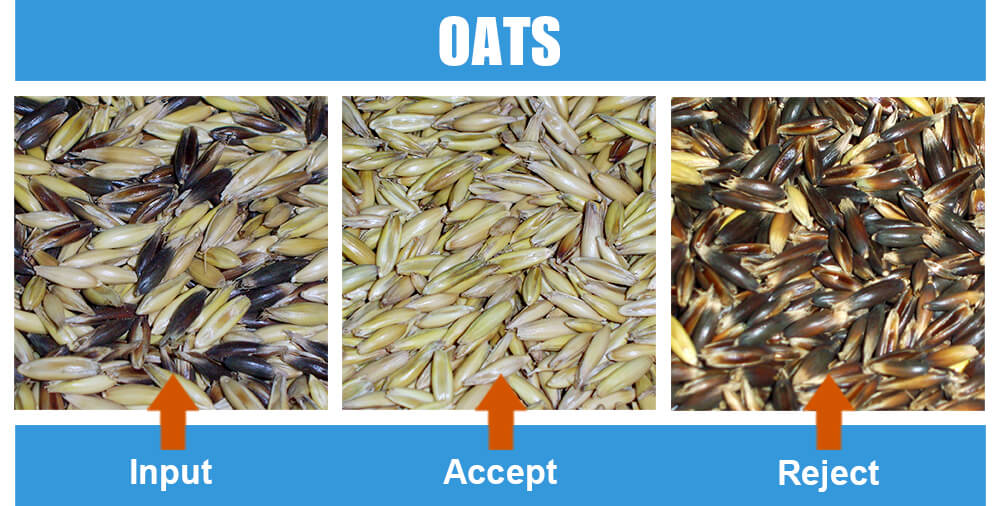 Sorted Sample Oats