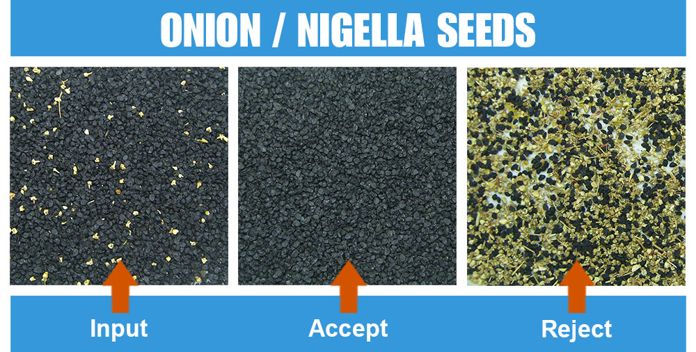 Sorted Sample Onion Nigella Seeds