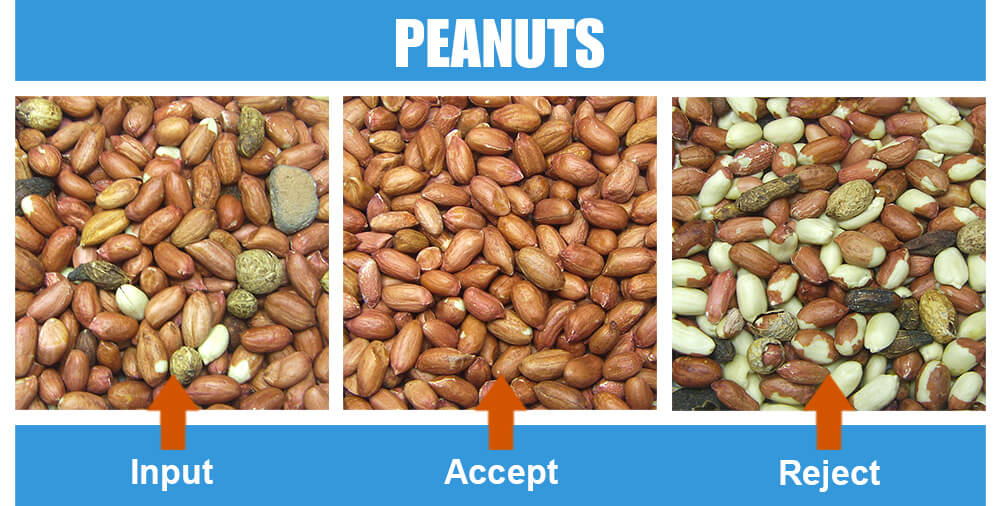 Sorted Sample Peanuts One