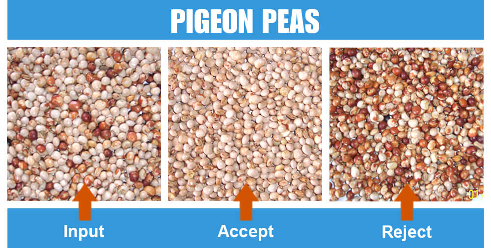 Sorted Sample Pigeon Peas