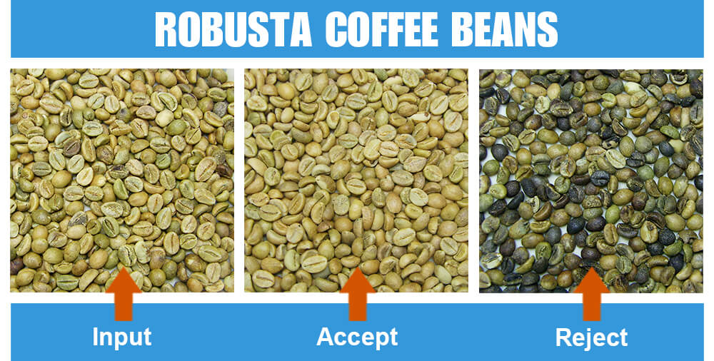 Sorted Sample Robusta Coffee Beans