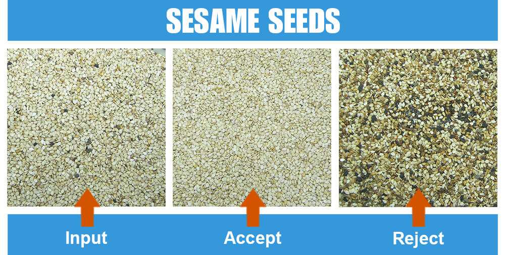 Sorted Sample Sesame Seeds