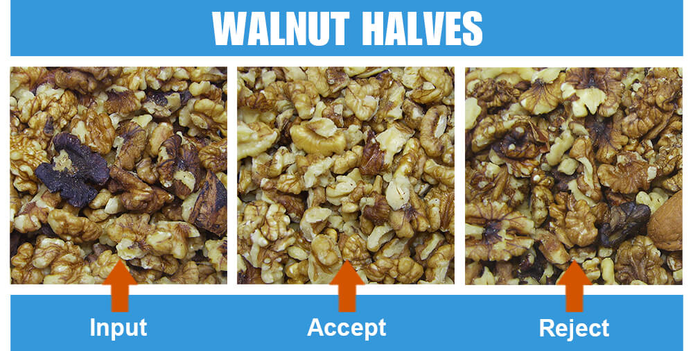 Sorted Sample Walnut Halves