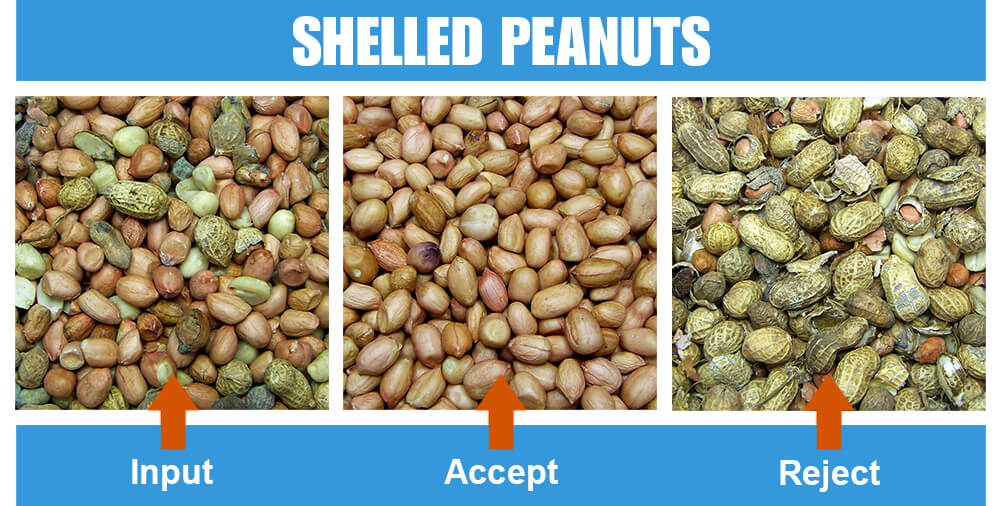 Sorted Sample Shelled Peanuts