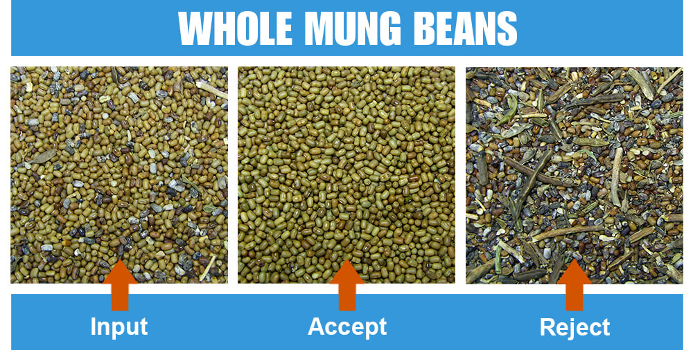 Sorted Sample Whole Mung Beans